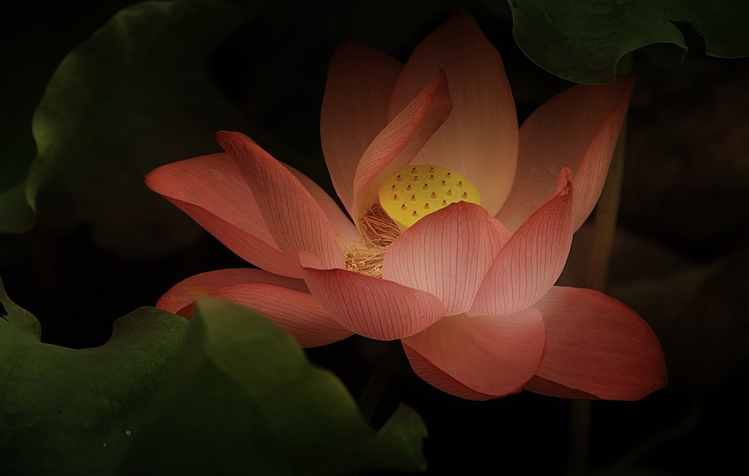 The Symbolic Lotus Grounded By Yoga Teacher Training
